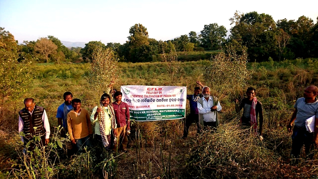 Field-day-on-Kharif-CFLD-Pulse-Pigenon-pea