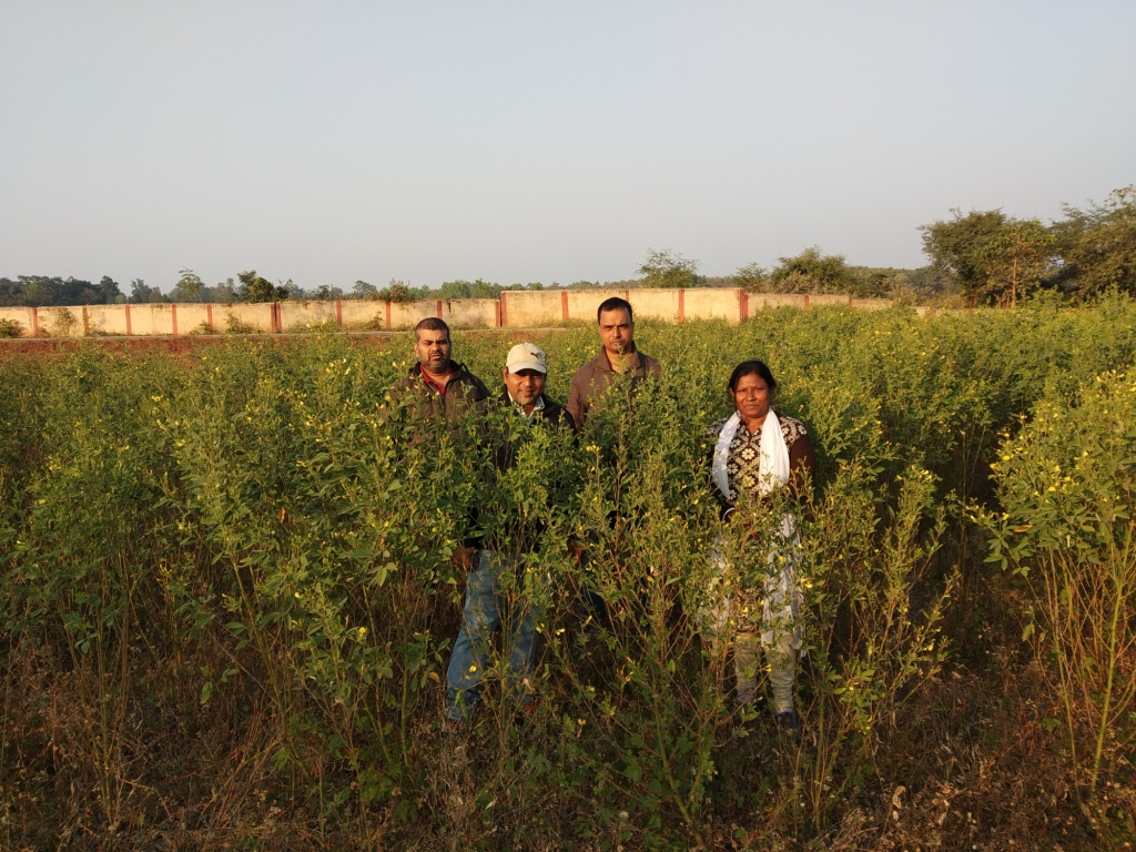 Pigeonpea-in-Instructional-Farm